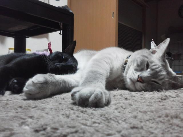 チョッパー&ビビちゃん