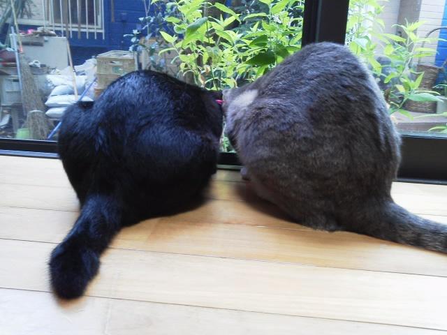 ルフィー & ビビちゃん