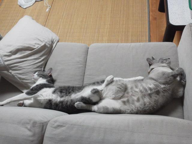 チョッパー&ルフィー