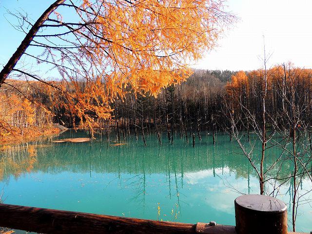 s-青い池、カラマツ