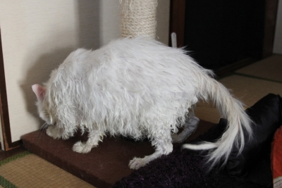 wet rat1 resized
