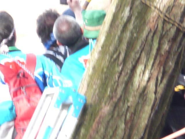 御柱祭:木落としの瞬間