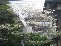 向かいの家の花
