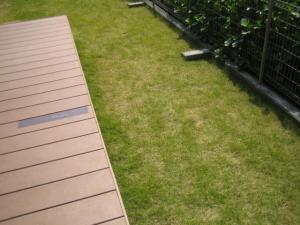 芝生の状態