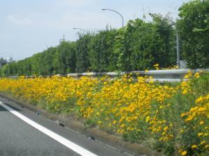 東名高速の路肩の花