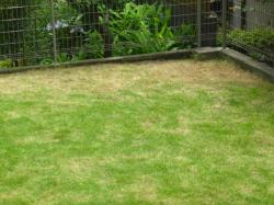 芝刈り 2013初 アフター 去年やり残し部