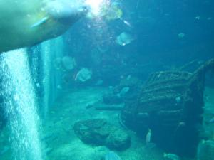 箱根水族館 沈没船の水槽