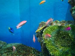 箱根水族館 熱帯魚