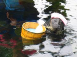 箱根水族館 アザラシ