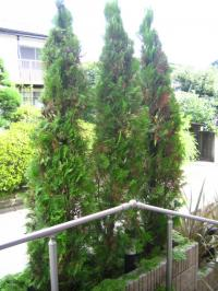 玄関の木の剪定 アフター