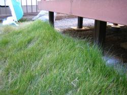 伸びきり芝生1