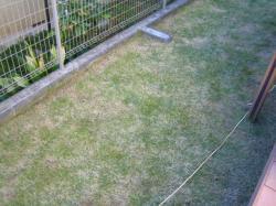 芝刈り後1