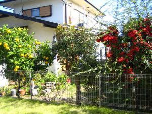 お隣の夏みかんと赤い実