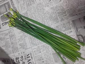 P1000406花にら