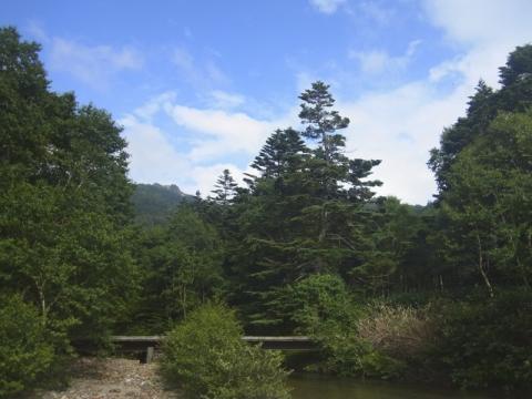 志賀高原で魚鱗草に出会った