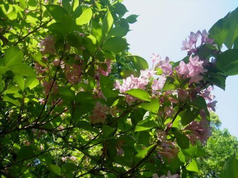 新緑、そして花盛り