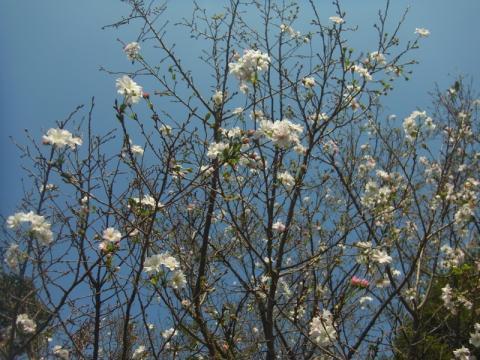 ホトトギスの咲く秋が来ました
