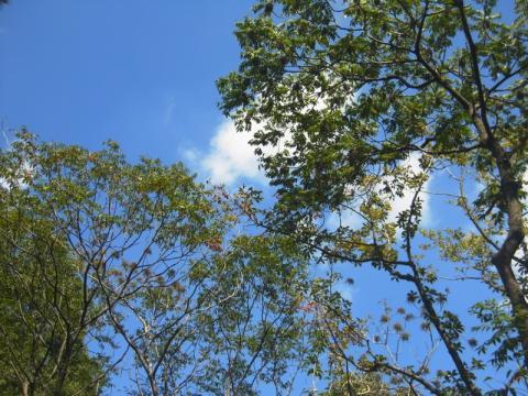 秋一番が咲きました、椿の話ですが