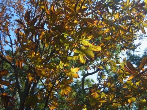 都心も紅葉が始まってます