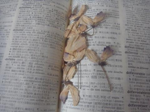 辞書の中で花を保存