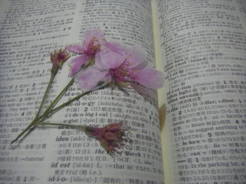 今年も増えた桜の栞