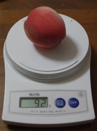 130628-鉢植えはなよめ1