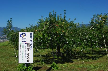 130917-りんご畑 中日