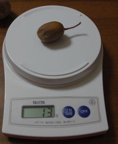 131104- 果肉の赤いキウイ2
