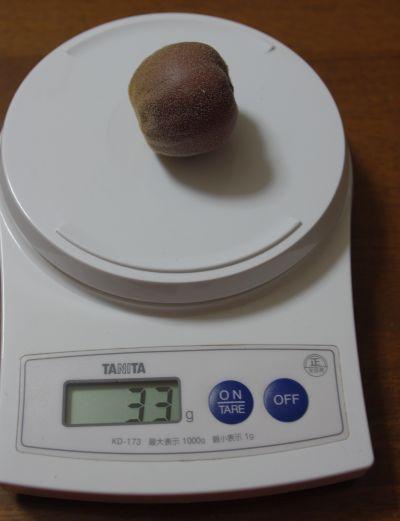 131104-不明キウイ