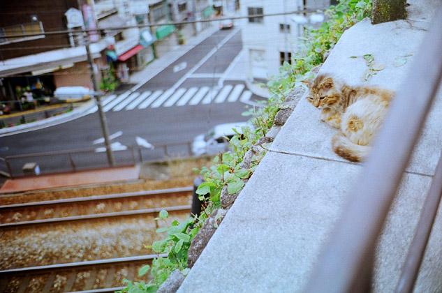 線路と野良猫。