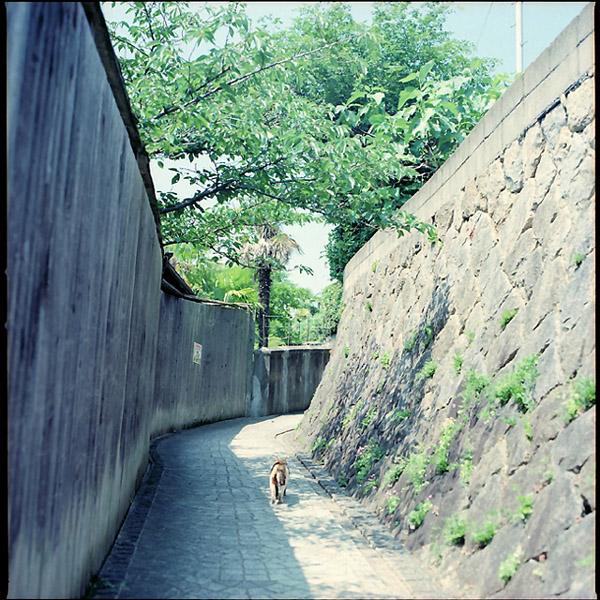 坂道の三毛猫