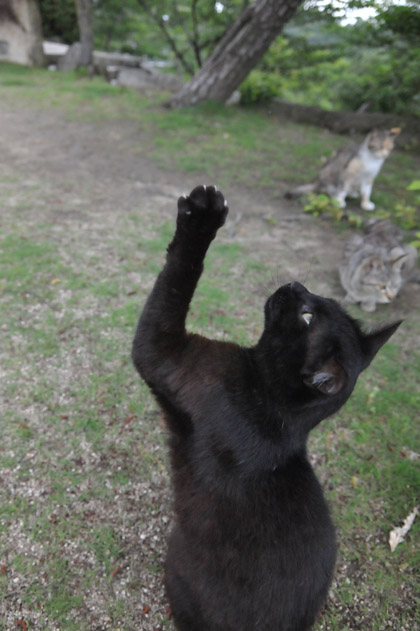 挙手する黒猫