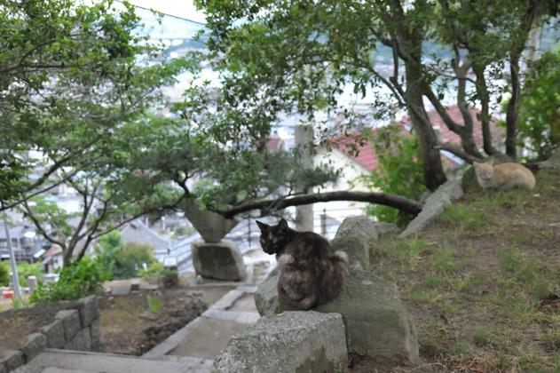 振り返るサビ猫