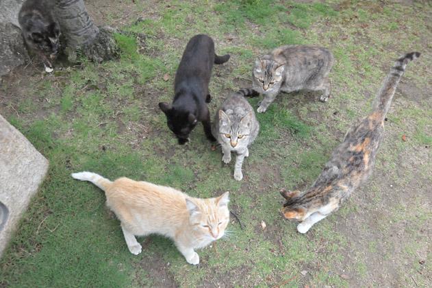 猫、猫、猫