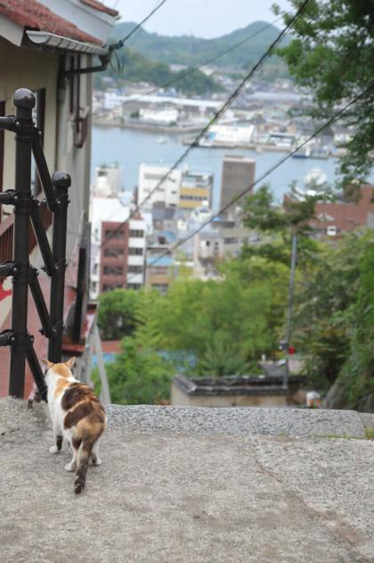 海を眺める三毛猫