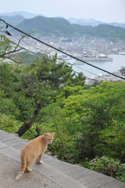 展望台の茶トラ猫