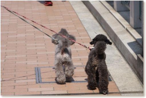 ルンルン、お散歩♪
