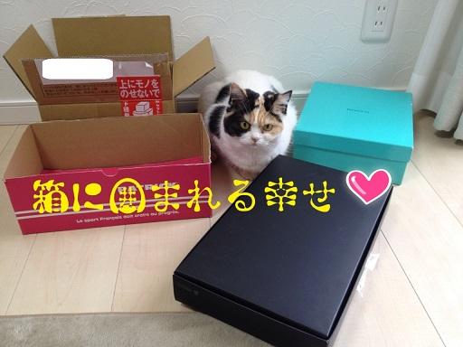 箱に囲まれる幸せ2