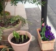 お庭の春☆