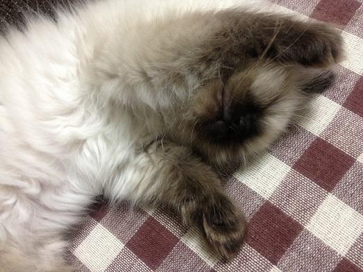 そら寝顔2