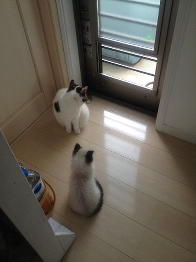猫も人間も2