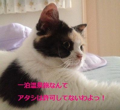 旅を許可しない猫1
