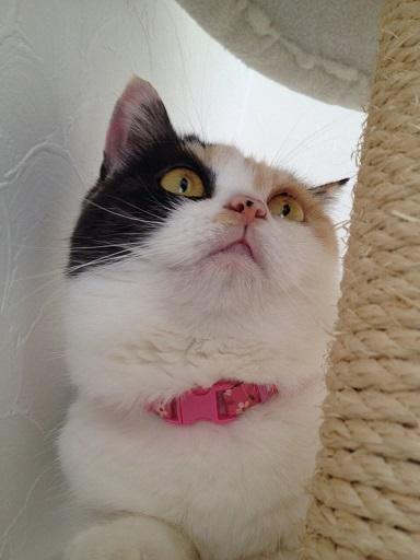 まめとピンクの首輪1