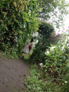 20120812紫竹ガーデンにて1