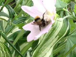 20120812紫竹ガーデンにて2