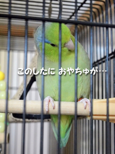 P4223047.jpg