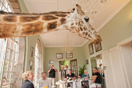 giraffemanor5.jpg