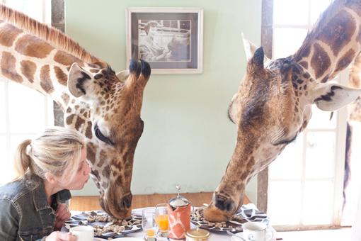 giraffemanor6.jpg