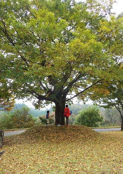 秋キャンプ3