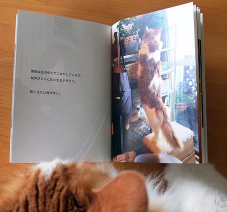 ねこ写真集-4